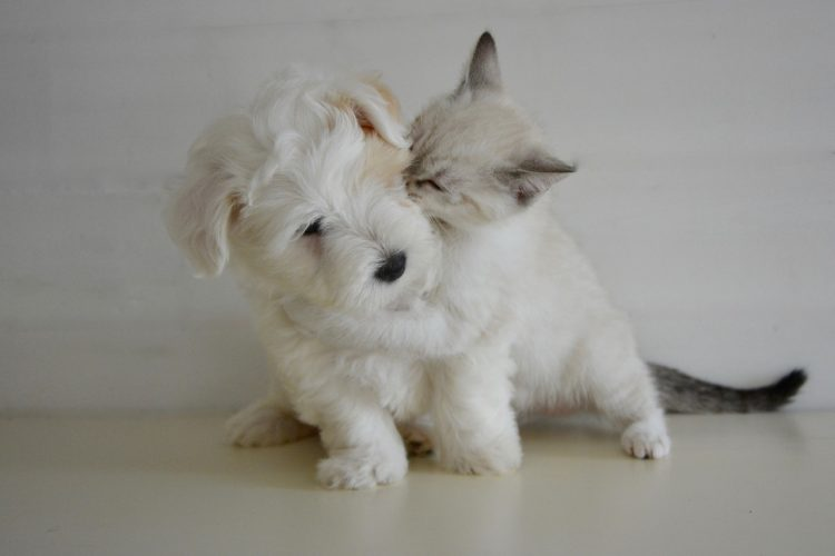 Cat and Dog Kisses